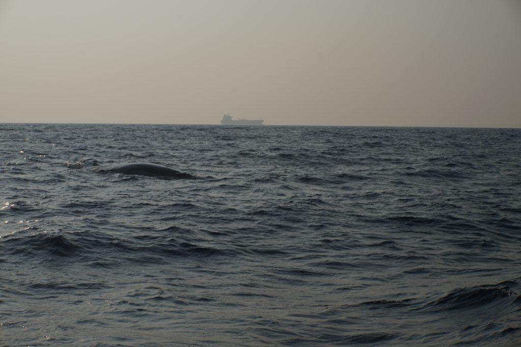 walvis tour mirissa