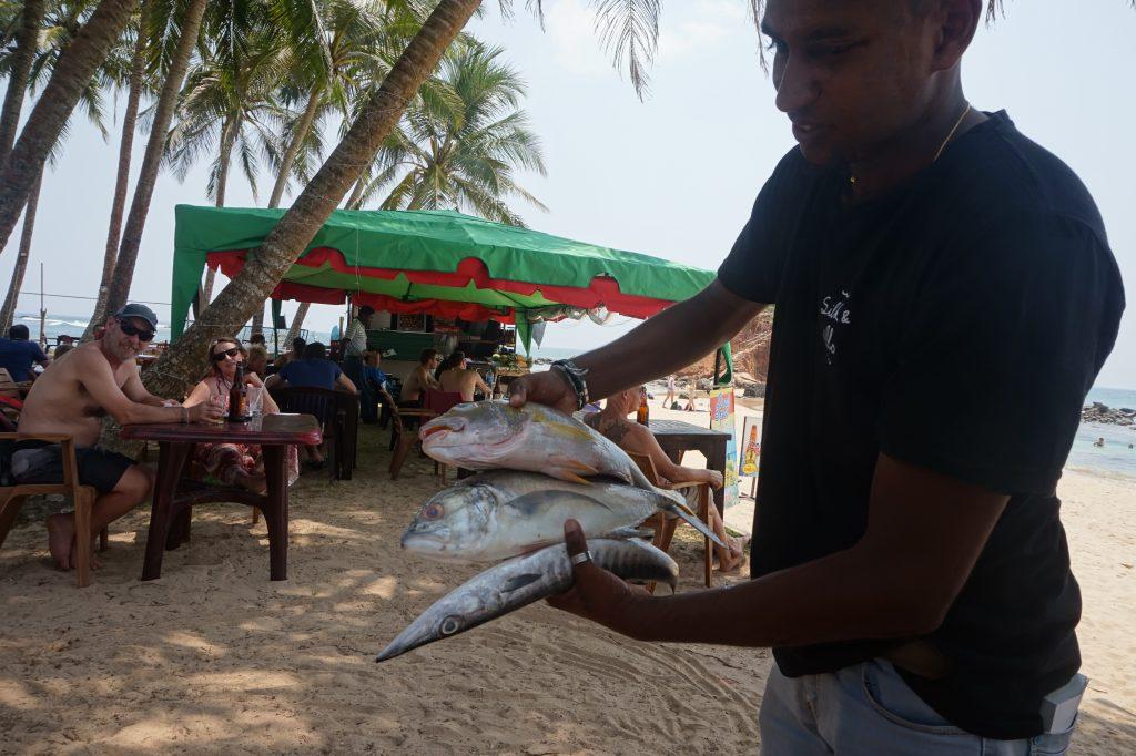 vissen sri lanka